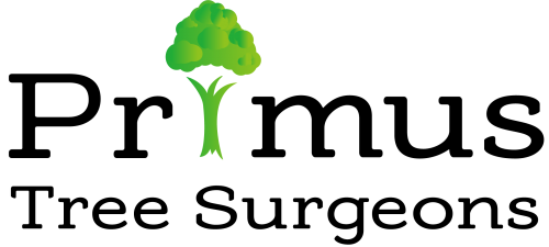 Primus Tree Surgeons